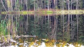 nyírfa : Crane shoot of beautiful wild forest and lake.