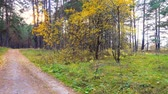 ноябрь : Road through beautiful autumn forest. Leaves barely sway in the wind. 4k pro res video.