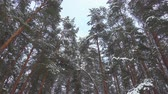 Seamless slow motion footage of falling snow in pine winter forest, pro res. Filmati Stock