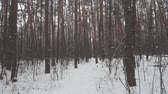 Slow motion among trees in winter forest and falling snow