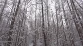 Slow motion falling snow in beautiful winter forest, full hd pro res. Filmati Stock