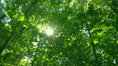 finsko : Sun through green leaves.