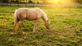 pretty : Horse on a pasture Stock Footage