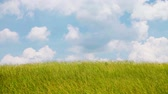 vibrante : Wind over grass field Stock Footage