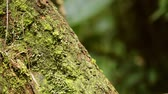 américa central : Fire ants on a tree Stock Footage