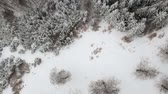 nevoeiro : Winter aerial view above the frozen forest