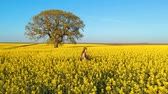 Slow motion of a beautiful woman in the rapeseed field Stok Video