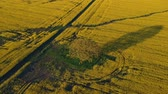 venkov : Aerial view of beautiful rapeseed field