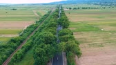 Aerial view over the road with trees on the both sides in the middle of the field and cars driving