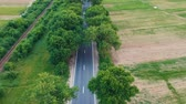 conduzir : Aerial view over the road with trees on the both sides in the middle of the field and cars driving