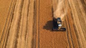 ziarno : Summer view of combine harvester machine, in the romanian fields. Aerial view of harvesters Wideo