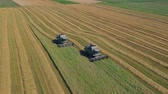 centeio : Summer view of combine harvester machine, in the romanian fields. Aerial view of harvesters Vídeos