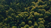 джунгли : Aerial view over the green forest