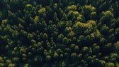 outono : Aerial view over the green forest