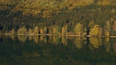 czerwony : Autumn landscape of the colorful forest, at the mountain lake edge, with beautiful reflexions Wideo