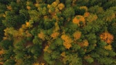 Aerial view above the colorful forest, in autumn