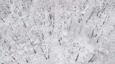 caminho : Aerial view of the forest covered with snow, in winter