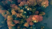 джунгли : Aerial view above the colorful forest, in autumn