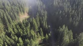 Aerial view of the green forest in the morning light