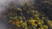 Aerial view of the beautiful, colorful forest, in Slovenia Stock mozgókép