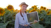 jediný květ : female shows symbol of approval in backlight keeps in hand solar battery, joyful girl hold solar panel near field of sunflowers and show hand gesture like, environmentally friendly resources