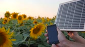 coletor : cellular telephone and solar battery in arms people beside field in slow motion, hands keep solar panel on background blue sky and sunflowers, charging on mobile close-up in backlight