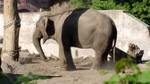 ton : elephant sprinkles itself with the help of a trunk to protect itself from flies in the zoo