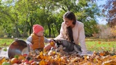 fiel : family weekend, mom with little kid and husky dog sit near a bucket with apples on plaid in an autumn park beside leaf pile