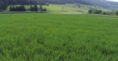 спидвей : Aerial video, green field near highway in background of coniferous forest