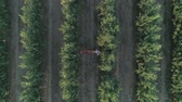 jíst : relax on nature, aerial drone shot of young woman lying in a hammock with a basket of fruit in apple orchard Dostupné videozáznamy