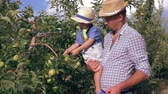 pomáhá : family in apple garden, little boy helping and picks up fruits from tree on hands of father in the summer day outdoor
