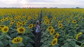 helianthus : enjoying nature, aerial shooting from drone of teen girl in sun hat is walking along yellow field of sunflowers during her summer holiday Stock Footage
