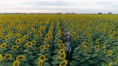 helianthus : family vacation on the nature, aerial shooting from drone of sisters with a younger brother walk around the field with sunflowers