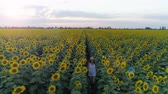 helianthus : happy girl runs between rows of sunflowers outdoors during her summer holiday, aerial shooting from drone