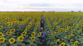 helianthus : nature and children, drone view on sisters with a younger brother walk around the field with sunflowers and enjoy the fresh air in slow motion