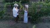 vinná réva : rural love, aerial view on winemaker couple drinks white wine at vineyard from glassess outdoors