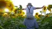 helianthus : happy childhood, kid raises hands imitating a flight on sunflower field sitting on the neck of the sister in sun light Stock Footage