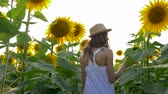 helianthus : harvest, young girl walks between rows of sunflowers and enjoys the beauty of the field in the sunlight