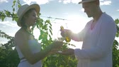 şarapçılık : happy farmer treats rural girl with wine of autumn harvest and flirts on vineyard plantation in bright sunlight at afternoon Stok Video