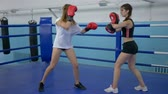 combativo : athletic girls train in short shorts in gym, girl takes blows on boxing paws of a strong female in gloved on ring Vídeos
