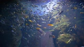 подводный : fish oceanarium, different water animal species swimming in large aquarium at zoo Стоковые видеозаписи