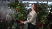 observar : portrait of cute young woman who is choosing flowering plant in department of houseplants, in supermarket to decorate interior of apartment in background of greenhouse with green plants