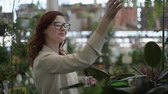 jardinier : cute smiling female customer in glasses for vision chooses decorative home plants in pots, in flower shop to decorate house or office background of green plants in greenhouse Vidéos Libres De Droits