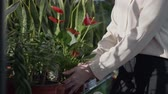 young female employee works as a florist in flower shop, happy sales manager examines decorative potted flowers on shelves in flower shop, close-up Vídeos