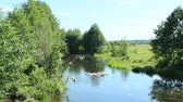 vários : hatch of white geese swimming on the river Stock Footage