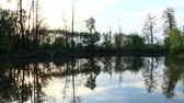 переполнение : Evening landscape with flooding in marshland in spring. Spring view. Water scenery