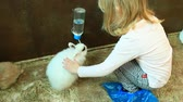 króliczek : Little girl stroking rabbit drinking water from drinker in zoo. Child taking care of pet. Rabbit drinking water Wideo