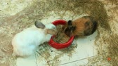 Brood of little young amusing rabbits in zoo. White rabits. Group of domestic rodents. Rabbits eating forage in zoo