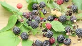 fruit : Crop of black raspberry berries. Ripe Rubus occidentalis in bucket. Bucket full of fresh and sweet black raspberries. Close-up of ripe raspberry. Harvest of Rubus occidentalis