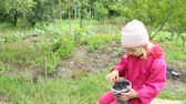 Little baby eating black raspberry from bucket. Child enjoying berries of black raspberry. Crop of berries 무비클립